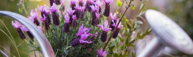 garden-733872_1920