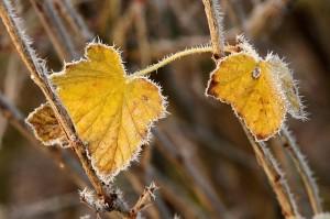 W styczniu i w lutym w ogrodzie jest sporo prac do zrobienia. Większość, gdy nie ma śniegu, ale i w trakcie srogiej zimy jest co robić.