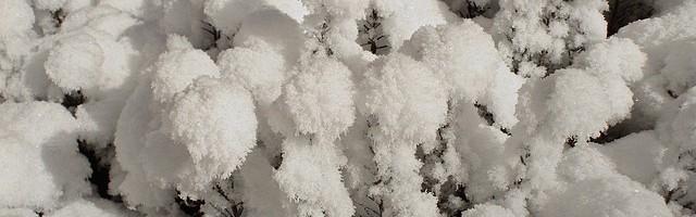 Zadbaj o to, by nadmiar śniegu, nie pozostawał na drzewach i krzewach zbyt długo. Prace wykonuj bezpiecznie, żebyś nie ucierpiał ani Ty ani Twoje drzewa i krzewy.