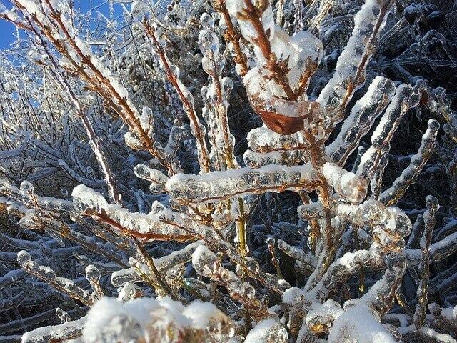 Zadbaj o to, by nadmiar śniegu, nie pozostawał na drzewach i krzewach zbyt długo. Prace wykonuj bezpiecznie, żebyś nie ucierpiał ani Ty ani Twoje drzewa i krzewy. Zadbaj o to, by nadmiar śniegu, nie pozostawał na drzewach i krzewach zbyt długo. Prace wykonuj bezpiecznie, żebyś nie ucierpiał ani Ty ani Twoje drzewa i krzewy.