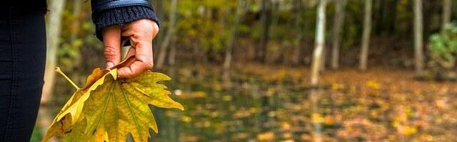 autumn-925727_640