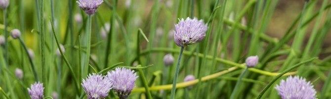 wild-flowers-821923_960_720