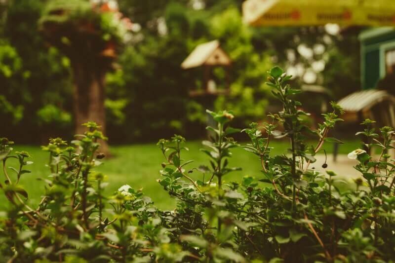 drabina ogrodowa